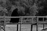 Shadow on the bridge / Ombre sur le pont
