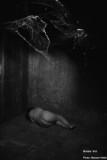 In the attic / Dans le grenier