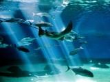 Maui Aquarium 441