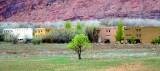 Green Tree in Field Moab Utah 583