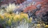 Wild Plants at Canyonlands National Park Utah 273