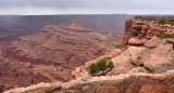 Brave Visitors at Dead Horse Point State Park Moab Utah 409