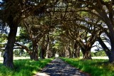 Santa Rosa to Point Reyes Scenic Drive, California June 2017