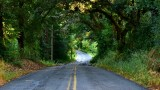 Tree tunnel on Trenton Road Forestville Califonia 179