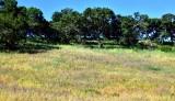 Landscape in Sonoma County California 277