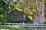 Barn in Sonoma County 332