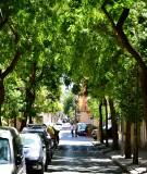 Beautiful Street in Barcelona Spain 048