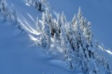 Winter Wonderland in Cascade Mountains 988