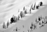 Trees on Rimrock Ridge Washington State 444