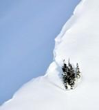 Cluster of trees on Mount Buckindy Washington 219