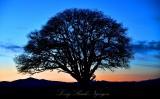 Tree in Field Corvallis Oregon 087b