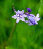 Purple Flower 010