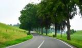 Tree covered Route de Hannut, Gelbressee, Belgium 023