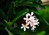 Flower at hotel, Maui 023