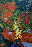 Stunning fall colors along Goat Creek and Lennox Mountain, Washington 116