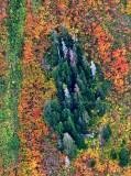 Vivid colors of autumn in Cascade Mountain, Washington 393