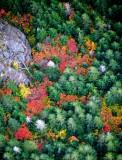 Fall Colors at the base of Crosby Mountain, Washington 368
