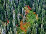 Fall colors in Cascade Mountains, Washington 282
