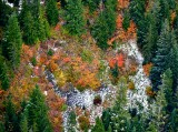 First snow of the season on fall foliages, Cascade Mountains 050