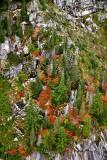 Fall foliage on Static Point, Cascade Mountains 062