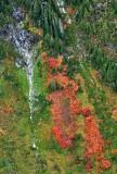 Bright colors in Salmon Creek Valley, Cascade Mountains, Washington 143