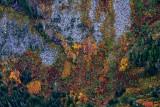 Autumn colors in Salmon Creek Valley, Washington 157