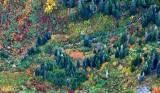 Autumn colors in Salmon Creek Valley, Washington 159