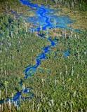 Boggy Gully Swamp, Oats, South Carolina 534