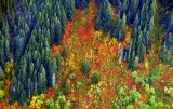 Autumn colors on Crosby Mountain, Washington 141a