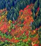 Brilliant colors of fall in Cascade Mountains, Washington 113