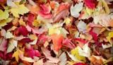 Autumn in Bend Oregon
