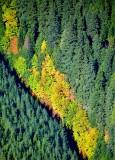 Fall in Cascades 657