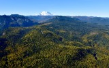 Fall foliages in Eastern Washington and Mount Rainier, Washington 329