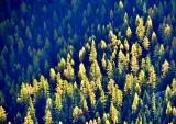 Autumn on Fifes Ridge in Norse Peak Wilderness, Washington 487a