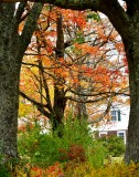 Framed foliage in the fall, Bruinswick, Maine 108