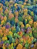 Fall Colors on Lord Hill Regional Park, Snohomish Washington 192