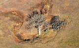 Tree in field by Glen Ullin, North Dakota 380