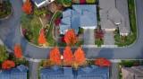 Autumn in the neighborhood, Washington 017
