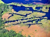 Swamp in Ace Basin, South Carolina 632