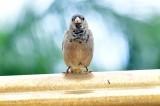 Bird Maui 210