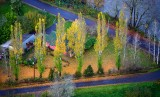Autumn along the Snoqualmie River, Fall City, Washington 205