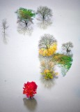 Colorful trees in flooded Snoqualmie River, Fall City, Washington 553