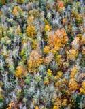Last of 2018 Fall Colors, Issaquah, Washington 169
