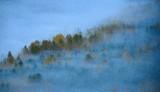 Misty Landscape in Washington 782b