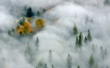 Touch of Autumn in Foggy Landscape 273