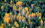 Last of fall colors in Pierce County, Washington 242