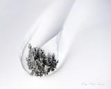 Cluster of Tree in Teardrop Snow Drift 429b
