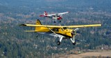 Beaver and Bird Dog over Redmond, Washington 337