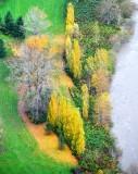 Yellow and Green landscape, Fall City, Washington 188