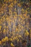 Late fall colors 078
